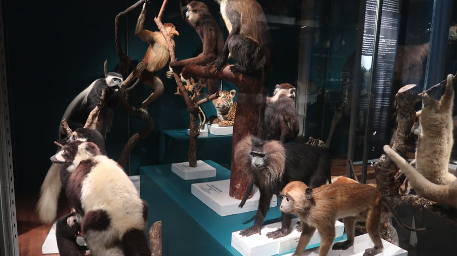 The Museum of Evolution